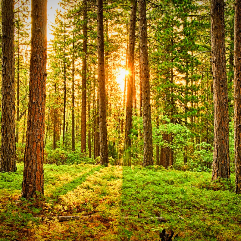 Picture of trees nova blog